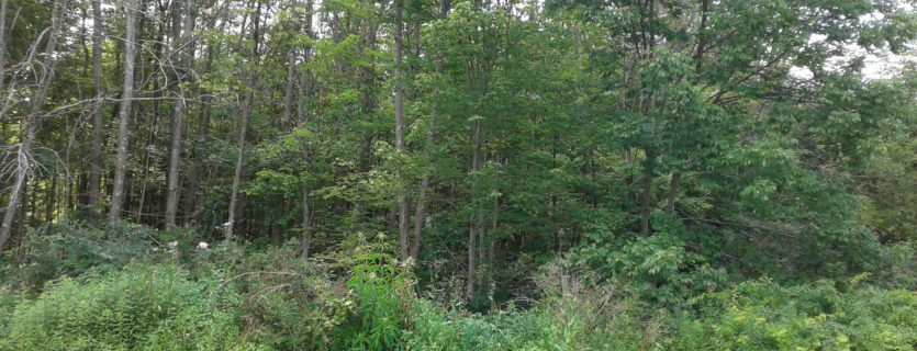 Naugle Drive/Fifty Acre Road – Lot 2